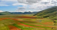 Castelluccio di Norcia Italia (carlocorv1) Tags: natura montagne cielo altopiano fioritura fiori monti sibillin colori castelluccio lenticchia terremotoi