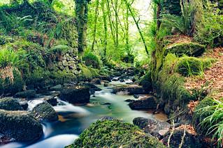 Kennel Vale River