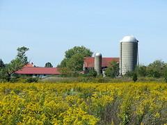 BARN & SILOS (Picsnapper1212) Tags: barn silos farm agriculture scene abandoned abandonment clintoncounty ohio goldenrod