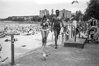 seagulls, Manly beach, Sydney, summer 2018  #519