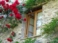 Sobral de São Miguel (António José Rocha) Tags: portugal sobraldesãomiguel beirabaixa janela aldeiaflorida roseira rosas cores