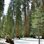 Sequoia National Park thumbnail