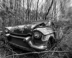 Vulgar (Wayne Stadler Photography) Tags: georgia preserved retro abandoned classic rustography automotive overgrown vehiclesrust rusty junkyard vintage oldcarcity rustographer derelict white cadillac 1957