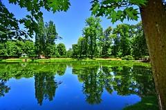 Summer Pond (Tobi_2008) Tags: teich pond sommer summer bäume trees natur nature landschaft landscape sachsen saxony deutschland germany allemagne germania