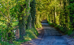 Howgare Road, Broadchalke (cantdoworse) Tags: country road broadchalke howgare martin wiltshire england gate canon trees