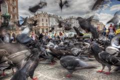 Pigeon Flap, Krakow (D-W-J-S) Tags: forflickr krakow poland city square pigeons