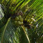 Nuts (Coco)