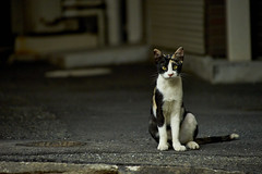 cat (NEKOFighter) Tags: cat neko straycat nikon japan ねこ 猫 野良猫