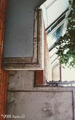 House (ahea64) Tags: high balcony windows tree up