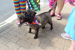 Dogs at Pride (ec1jack) Tags: ec1jack kierankelly canoneos600d isleofwight hampshire gay pride parade ryde island july 2018 summer sunny party march carneval england britain uk europe solent