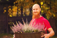 Autumn garden. A gardener with a red beard is holding a box of flowers in his hands. (Serge Touch) Tags: autumn garden gardening natural fall season green nature seasonal tool leaf background outdoor orange yellow foliage concept organic harvest work rake plant grass flower apple man colorful fruit farm raking red gardener agriculture yard decoration tree vitamin pot farming ripe hand food november caucasian rural leaves grape girl crop remove