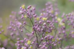DN9A4516 (Josette Veltman) Tags: garden tuin tuinfoto groen natuur nature garten jardin flowers bloemen