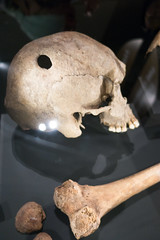 Foul play in Viking times (quinet) Tags: 2017 canada ontario rom royalontariomuseum schädel toronto vikings crâne skull 124