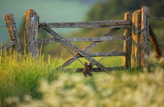 Gate on the South Downs