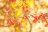 Art of leaves (elenashen5) Tags: leaves spring