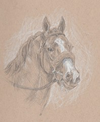 Justify (angelnumber25) Tags: justify horse racehorse pencil drawing charcoal sketch equineart