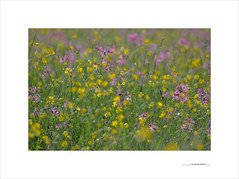 Los paisajes mínimos (E. Pardo) Tags: paisajesmínimos flores flowers blumen pradera wiese meadow primavera frühling spring colores colors farben luz licht light steiermark austria