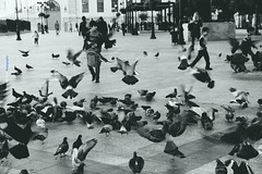 If you want to fly give up everything that weighs you down... (Maria Michalinos-www.debop.gr/deBlog/the-athenians) Tags: birds fly bw monochrome kid love letgo beautiful athens downtown greece town myathens people bird πλατείακοτζιά kotziaplace ilobsterit