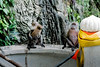Batu Caves 2018 (Roberto Maldeno) Tags: batu caves kl kuala lumpur malaysia maleisië