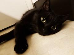 (denise.lovstrom) Tags: kurre cat cute