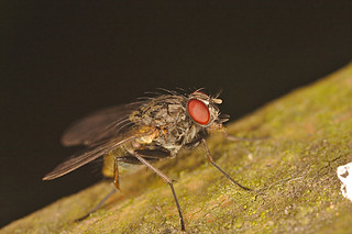 Fly IMG_0985