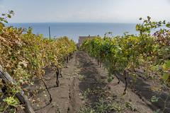 Vigne di Malvasia sulle pendici del vulcano... (Renato Pizzutti) Tags: vigne malvasia mare vigneto isoleeolie vulcano nikond750 renatopizzutti