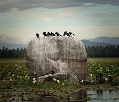 atelier peinture (Laurent BASTIDE Photographies) Tags: srilanka canon 6d 70200 landscape birds nature wild