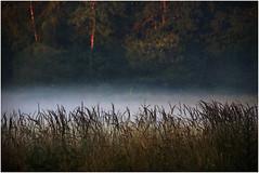 Morning fog (na_photographs) Tags: natur nature gräser nebel fog grass morgen