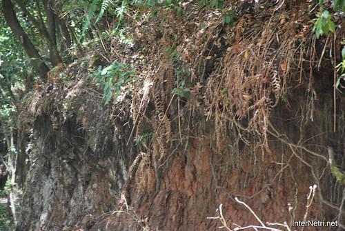 Національний парк Гарахонай, Гомера, Канарські острови  InterNetri  0732