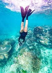 Marcia Snorkeling Heron Island-6 (Quick Shot Photos) Tags: australia canon canoncollective greatbarrierreef heronisland queensland underwater bogie au