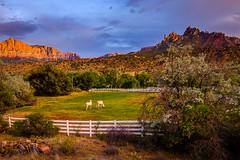 Near Zion National Park (rdpe50) Tags: landscape mountains rockformations ranch fence horses sunset zionnationalpark springdale utah usa