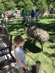 "Paul Watches an Emu • <a style=""font-size:0.8em;"" href=""http://www.flickr.com/photos/109120354@N07/42643498355/"" target=""_blank"">View on Flickr</a>"