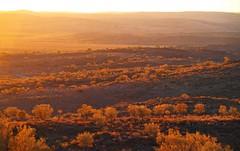 Sunset Light meets Desert Trees, Broken Hill, New South Wales, Australia (Red Nomad OZ) Tags: brokenhill sunset tree dusk australia newsouthwales nsw desert outback livingdesert landscape twilight light