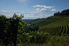 Il vigneto (paolo-p) Tags: vigneti wineyards linee lines nuvole clouds savorgnanodeltorre povoletto alberi trees