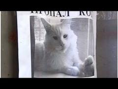 Cartel de gato perdido llama la atención por algo curioso (HUNI GAMING) Tags: cartel de gato perdido llama la atención por algo curioso