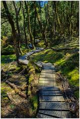 A walk in the woods 2 (e0nn) Tags: hdpentaxdfa2470mmf28edsdmwr tasmania visittasmania cradlemountain hiking pentaxk1 pentax ricoh