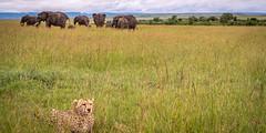 This is nature. (Markus Jaschke) Tags: afrika kenia mara masai