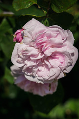 Batignolles (jmarnaud) Tags: paris france spring 2018 blue sky walk park garden batignolles building rail flower