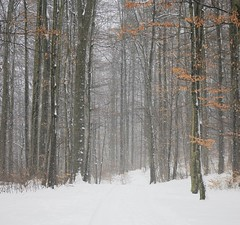 Forest Road in Winter (David K. Marti) Tags: nature natural landscape scenic scenery forest woods trees plant road branches trunks winter snow snowfall cold snowy season seasonal country countryside day daylight color colored colour white brown red orange green outdoors outdoor outside wood tree