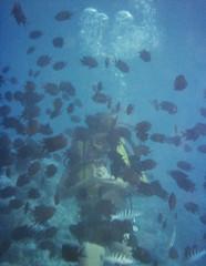 Steve Scuba Diving (Serendigity) Tags: greatbarrierreef underwater bubbles scuba fish diver diving australia queensland stcrispinreef reef kodachrome 35mm slide film