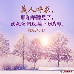 圣经金句- 义人呼求,耶和华听见了,便救他们脱离一切患难 (追逐晨星) Tags: 树木 阳光 义人 祷告 耶和华神 圣经金句 金句卡片 金句 金句图片