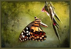 Lemon Butterfly (ulli_p) Tags: asia artofimages aworkofart awardtree butterflys canoneoskissx5 flickraward flowers isan insects light likeapainting macro nature ruralthailand southeastasia thailand texture textured texturedphoto