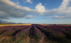 L'or bleu de Provence (Nature Box) Tags: or bleu provence paysage lavande 1020mm img4299 sigma1020mm