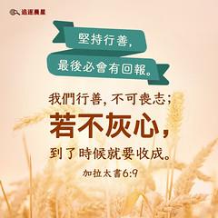 圣经金句-我们行善不可丧志 (追逐晨星) Tags: 圣经金句 金句卡片 金句图片