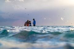 Underwater Snorkeling Heron Island-19 (Quick Shot Photos) Tags: canon canoncollective heronisland macro queensland bogie australia au