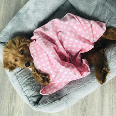 Pearly looks awesome with her pink blanket