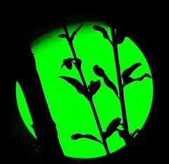 Green Silhouettes (Chic Bee) Tags: pool lights poollights colors colours colori colores couleurs pomegranate tree branches silhouettes green light tucson arizona usa