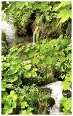 Still (aiva.) Tags: croatia hrvatska plitvice lakes landscape waterfall lake naturepark