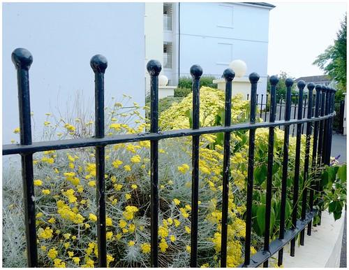 Sea of yellow...