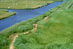 Fuji X-Pro1 + 35mm f/1.4 (Erol Cagdas) Tags: fujifilm fujinon fuji xpro1 35mm netherlands holland zaanseschans nature northholland landscape